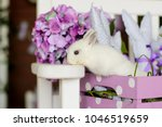 white rabbit on pink wooden box | Shutterstock . vector #1046519659