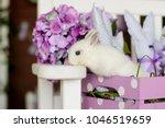 white rabbit on pink wooden box | Shutterstock . vector #1046519659