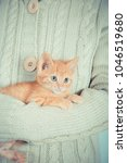 Stock photo cute little red kitten is sitting on his hands kitten in the hands red haired kitten soft tone 1046519680