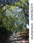 a female pilgrim walking along... | Shutterstock . vector #1046582374