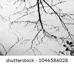 water with reflection of tree... | Shutterstock . vector #1046586028