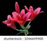 branch of saturated red pink... | Shutterstock . vector #1046649400