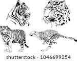 vector drawings sketches... | Shutterstock .eps vector #1046699254