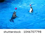 two dolphins play ball in water | Shutterstock . vector #1046707798