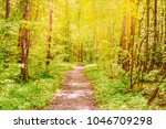 Road In A Sunny Summer Forest...