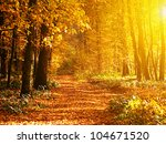 Autumn Forest In Sunset Light....