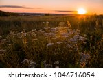 russian field in sunset light... | Shutterstock . vector #1046716054