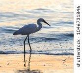 an egret silhouette | Shutterstock . vector #1046731846