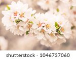 abstract blurred floral... | Shutterstock . vector #1046737060
