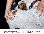 rabies vaccination  dog got a...   Shutterstock . vector #1046862796
