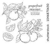 grapefruit vector set | Shutterstock .eps vector #1046870650