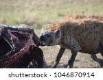 hyena feeding off carcass | Shutterstock . vector #1046870914