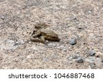 dead toad on the road | Shutterstock . vector #1046887468