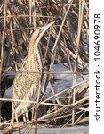 great bittern camouflaged in... | Shutterstock . vector #104690978
