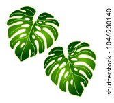 vector green leaves of tropical ... | Shutterstock .eps vector #1046930140