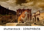cat and celsus library in...   Shutterstock . vector #1046948656