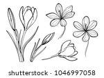 set of vector crocus flowers | Shutterstock .eps vector #1046997058