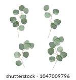 silver dollar eucaliptus leaves ... | Shutterstock .eps vector #1047009796