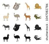 lama  ostrich emu  young... | Shutterstock .eps vector #1047082786