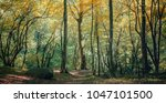 coniferous forest in the... | Shutterstock . vector #1047101500