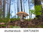 Forest Mushroom In The Grass.