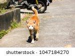 lost cat  yellow brown single...   Shutterstock . vector #1047184270