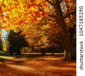 Small photo of Breathtaking Autumn park in Sunny Day. impressively beautiful colorfol trees in beautiful evening light at sunset. Unbeatable colors in nature. wonderful picturesque Scene. Awesome natural Background