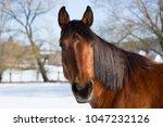 portrait of a brown mare in...   Shutterstock . vector #1047232126