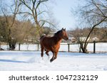 beautiful brown mare running in ...   Shutterstock . vector #1047232129