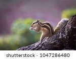 squirrels are members of the... | Shutterstock . vector #1047286480