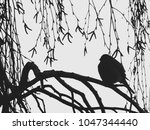silhouette of bullfinch on a... | Shutterstock . vector #1047344440