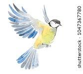 hand drawn watercolor... | Shutterstock . vector #1047367780