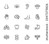 simple body parts icon set | Shutterstock .eps vector #1047375826