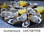 preparing french oysters for... | Shutterstock . vector #1047387958