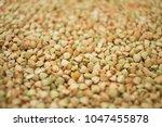 green buckwheat background ... | Shutterstock . vector #1047455878