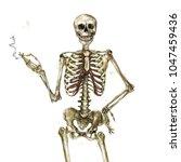human skeleton holding... | Shutterstock . vector #1047459436