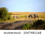 wild beautiful elephants | Shutterstock . vector #1047481168