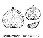 black and white fruit sketch... | Shutterstock .eps vector #1047538219