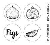 black and white fruit sketch... | Shutterstock .eps vector #1047538690