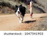 dog and man taking part in a... | Shutterstock . vector #1047541903
