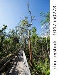 tropical hardwood hammock at... | Shutterstock . vector #1047550273