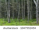 scary fairy forest in the swamp....   Shutterstock . vector #1047552454
