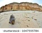 dead fish stranded on the beach ... | Shutterstock . vector #1047555784