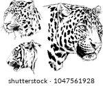 vector drawings sketches... | Shutterstock .eps vector #1047561928