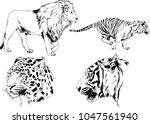 vector drawings sketches... | Shutterstock .eps vector #1047561940