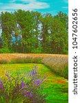 lavender field in a swiss... | Shutterstock . vector #1047602656