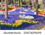 colorful flower beds during the ... | Shutterstock . vector #1047609694
