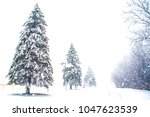 winter landscape in the woods | Shutterstock . vector #1047623539