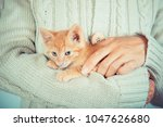 Stock photo cute little red kitten is sitting on hands kitten in the hands red haired kitten soft tone 1047626680