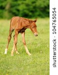 Baby horse in grass - stock photo